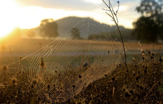 Фотообои Паутина на сухой траве