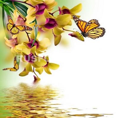 Бабочки около орхидеи