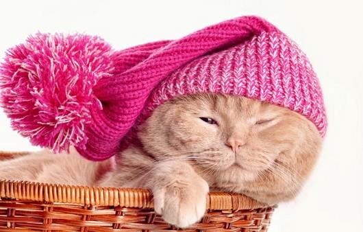 Фотообои Кот в шапке с бубном