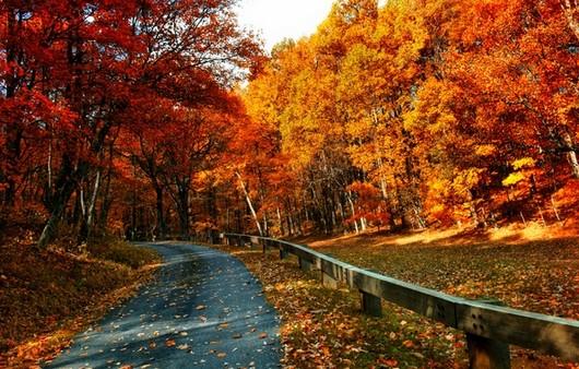 Дорога в осеннем заповеднике