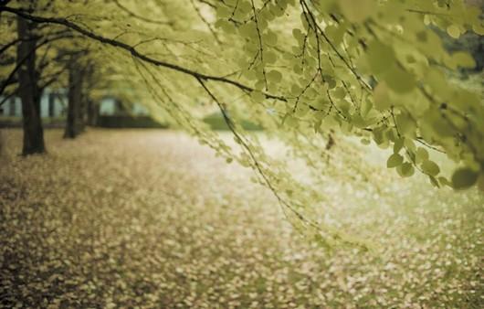 Жёлтые листья на деревьях