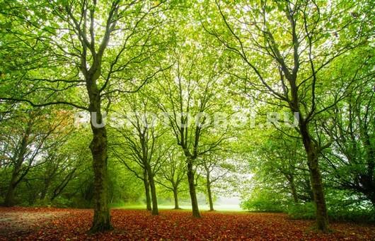 Зелёные деревья
