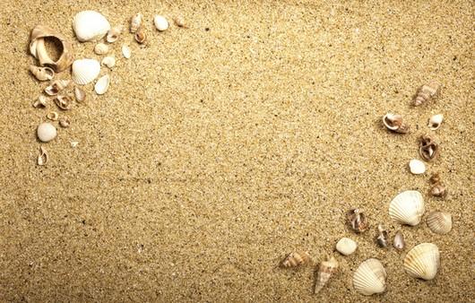 Фотообои Текстура песка с ракушками