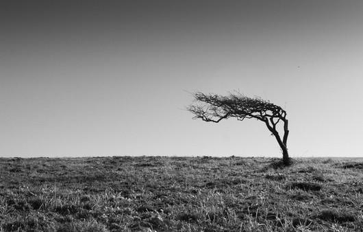 Чёрно белая фотография силуэта дерева в поле