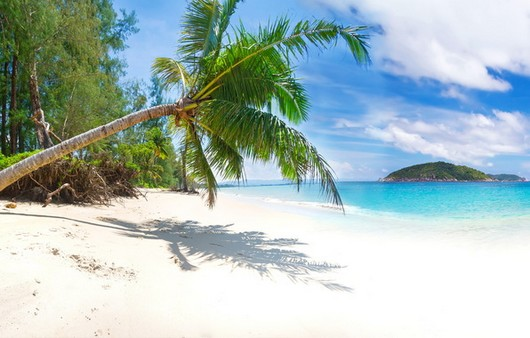 Склонившаяся пальма на пляже
