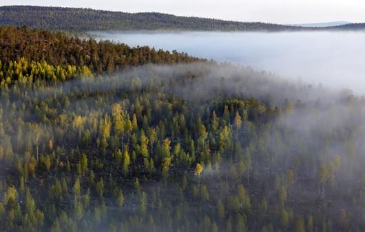 Лес в тумане с высоты птичьего полёта