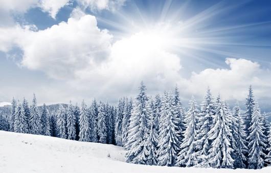 Снежные ели под лучами холодного солнца