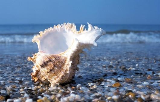 Морская ракушка на гальке