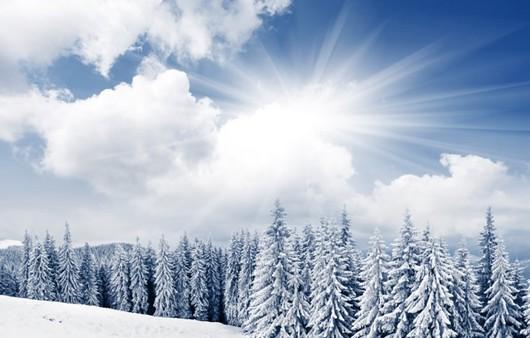 Зимний снежный лес в лучах холодного солнца