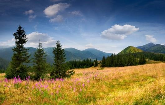 Луг с елями и горами в далекие