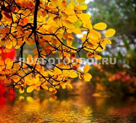 Осеннее дерево у воды