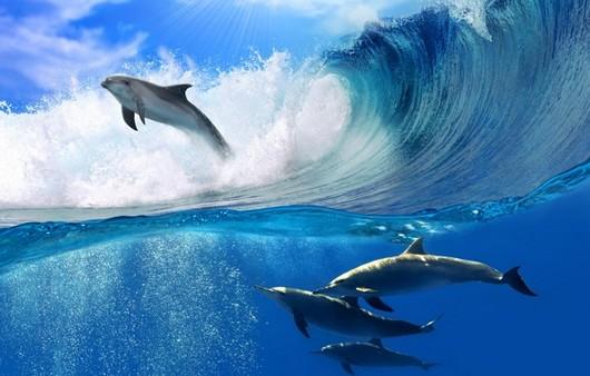 Играющие дельфины