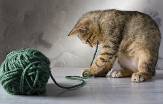 Игра кошки с клубком