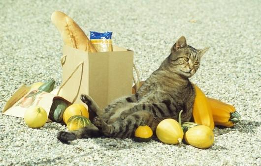 Кот с покупками