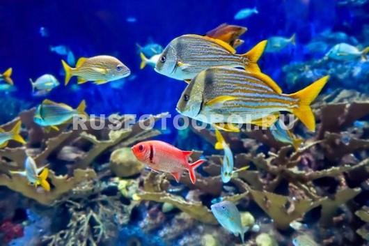 Жизнь около рифов