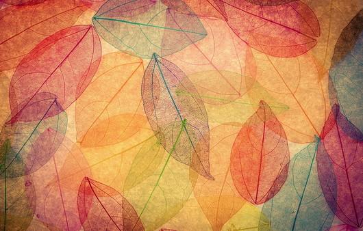Колор из осенних листьев
