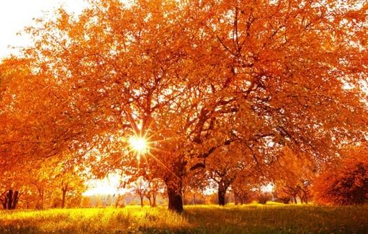 Фотообои Осенняя роскошь деревьев