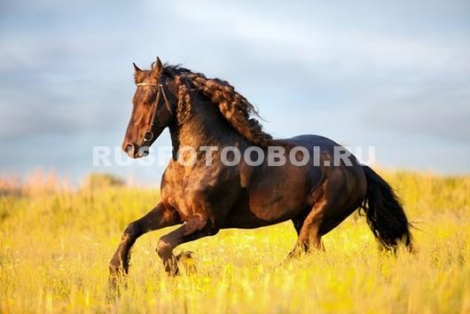 Бурая лошадь