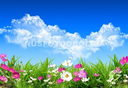 Летняя полянка