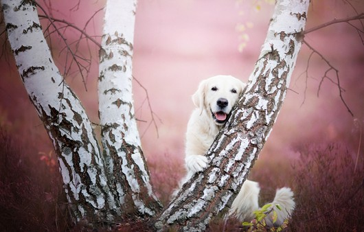 Позирующая собака