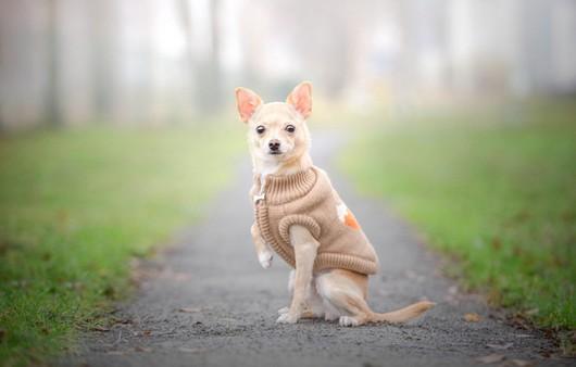 Собака в жилетке