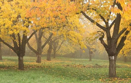 Фотообои Осенние деревья
