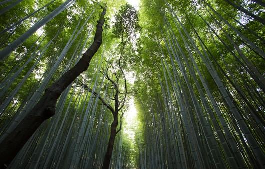 Высь деревьев