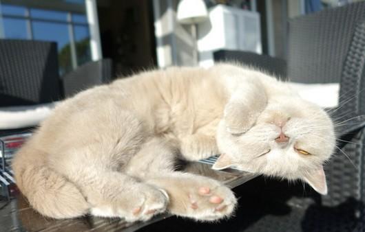 Киса спит кверхтормашками