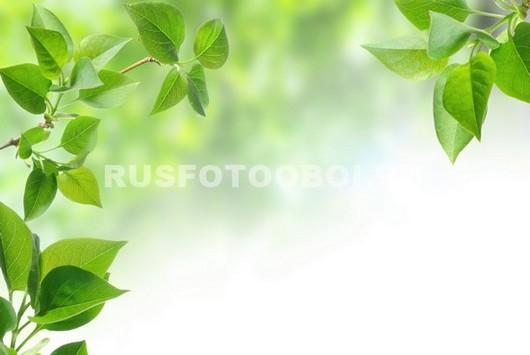 Фотообои Поле лист
