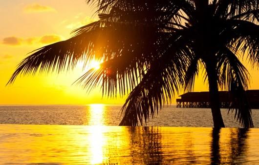 Силуэт пальмы в лучах заката