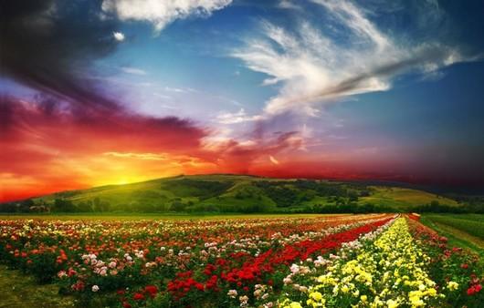 Цветущий цветочный луг и играющий красками горизонт
