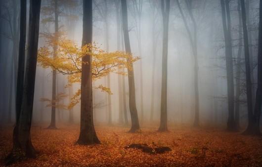 Фотообои Осенний лес в тумане