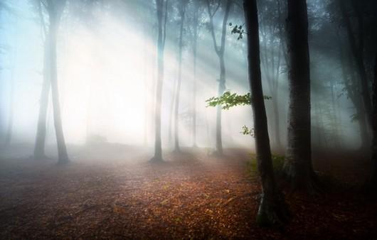 Лесной туман в чащобе