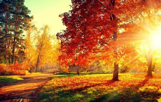 Фотообои Осенний лес-буйство красок