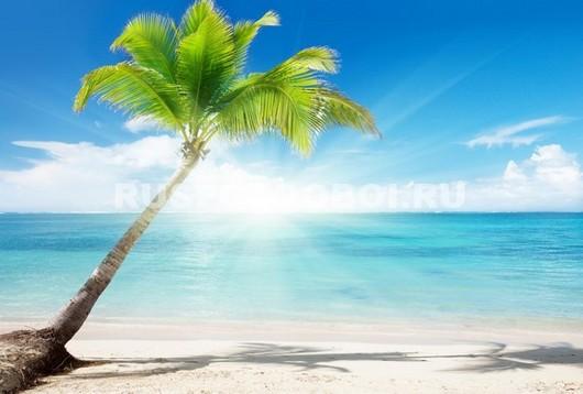 Пальма на фоне моря