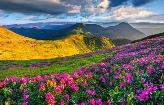 Цветущий горный склон
