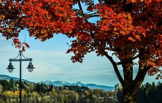 Пейзаж дерева и гор