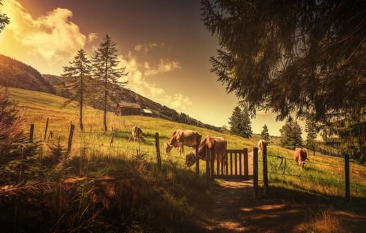 Склон холма с пасущимися животными
