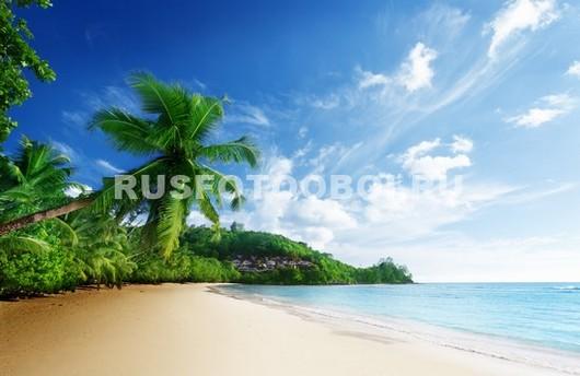 Тропический вид