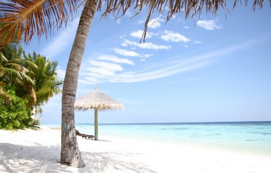 Фотообои Белый песок на пляже с пальмами