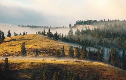 Вид с высоты холма на Сосновые деревья на лугу