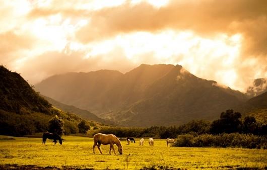 лошади на лужайки