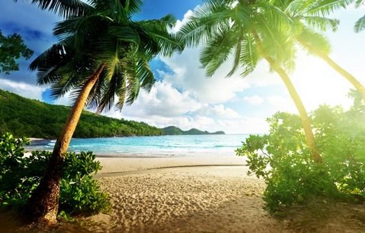 пейзаж в тропиках