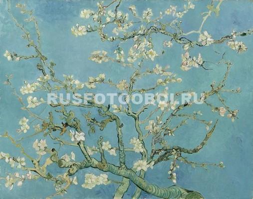 Ветка с белыми цветами