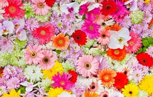 цветочный вид