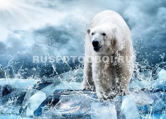 Фотообои Белый медведь