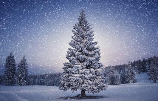 Фотообои одинокая елка