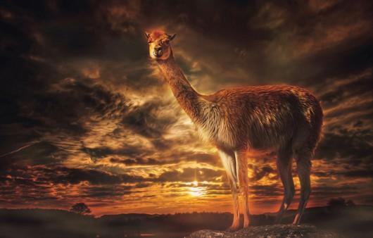 лама на закате