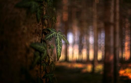 лесные растения