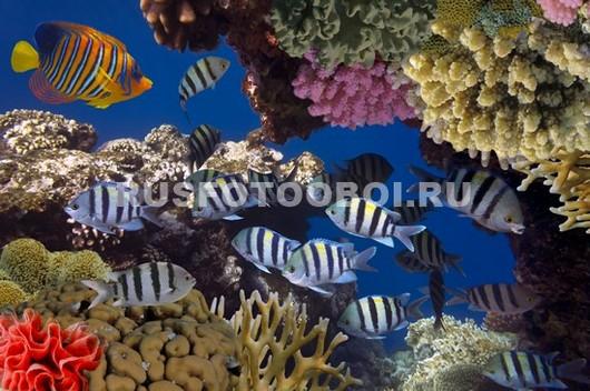 Рыбки между кораллами